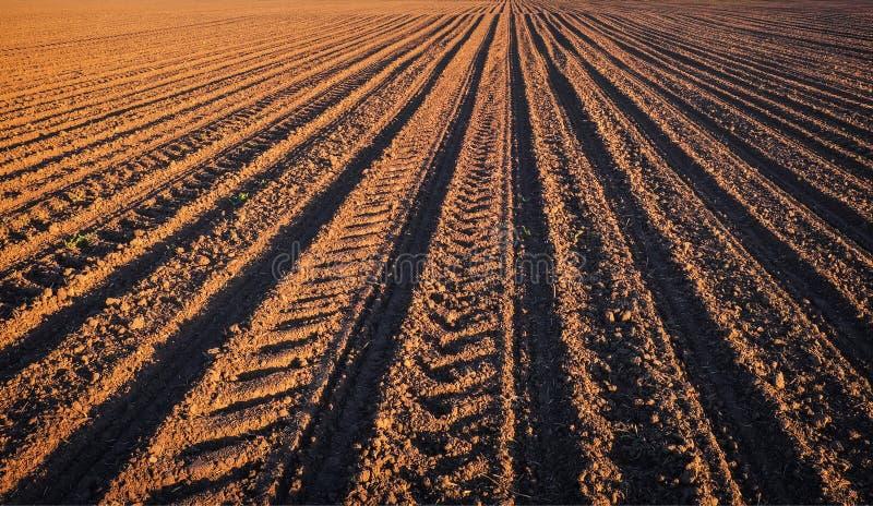 Fåror ror modellen i ett plogat fält som är förberett för att plantera skördar i vår arkivbild