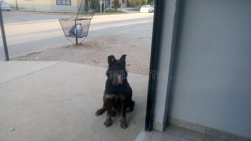 Félicité de chien photo stock