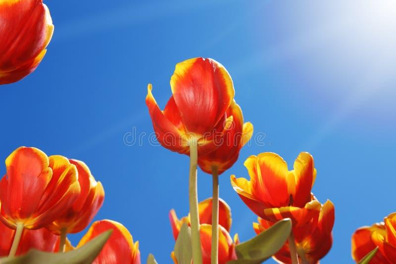 Félicitez le Sun image stock