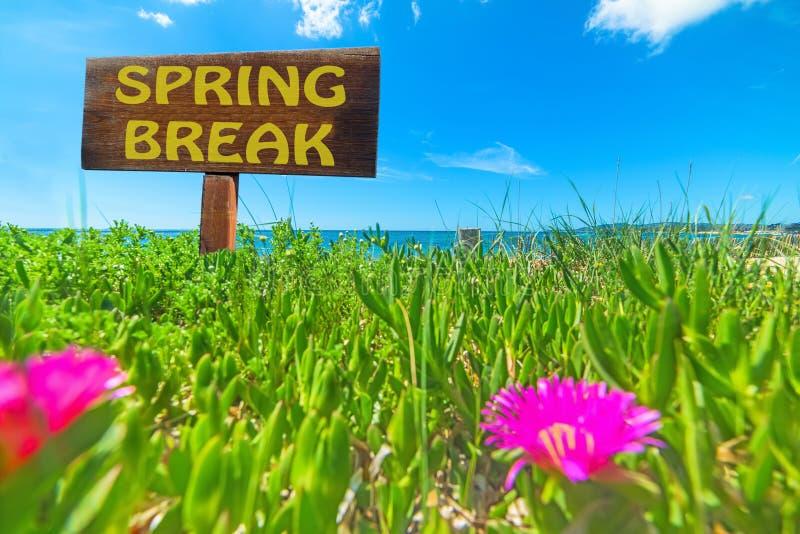 Férias da primavera escritas em um sinal de madeira foto de stock royalty free
