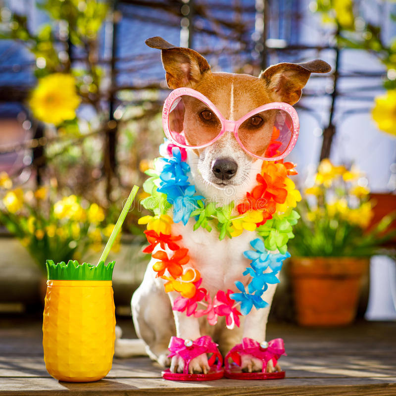 Férias das férias de verão do cão no balcão imagem de stock royalty free