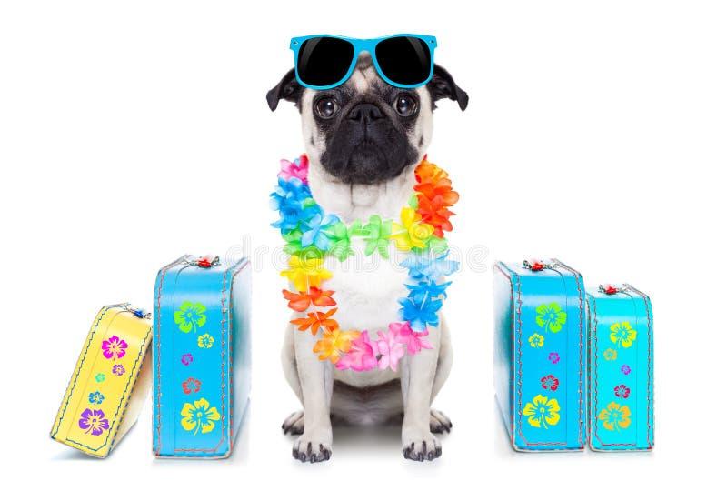 Férias de verão do cão foto de stock royalty free