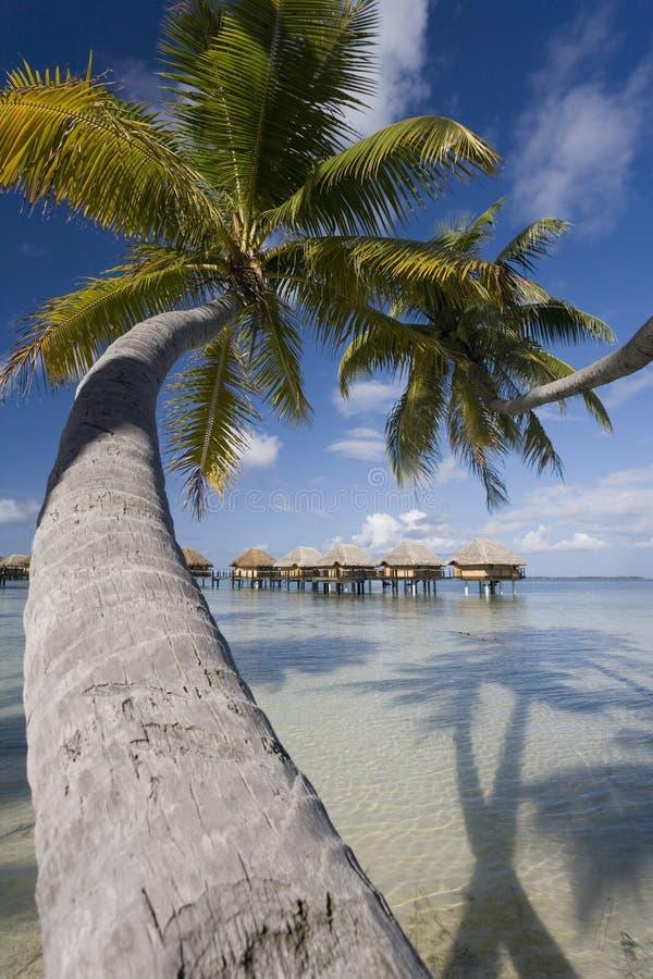 Férias luxuosas - Polinésia francesa - South Pacific imagens de stock royalty free