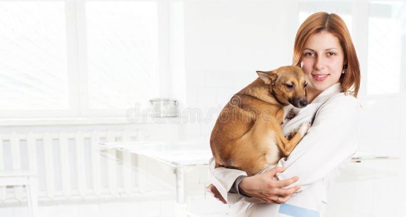 Fêmea do veterinário com um cão imagem de stock royalty free