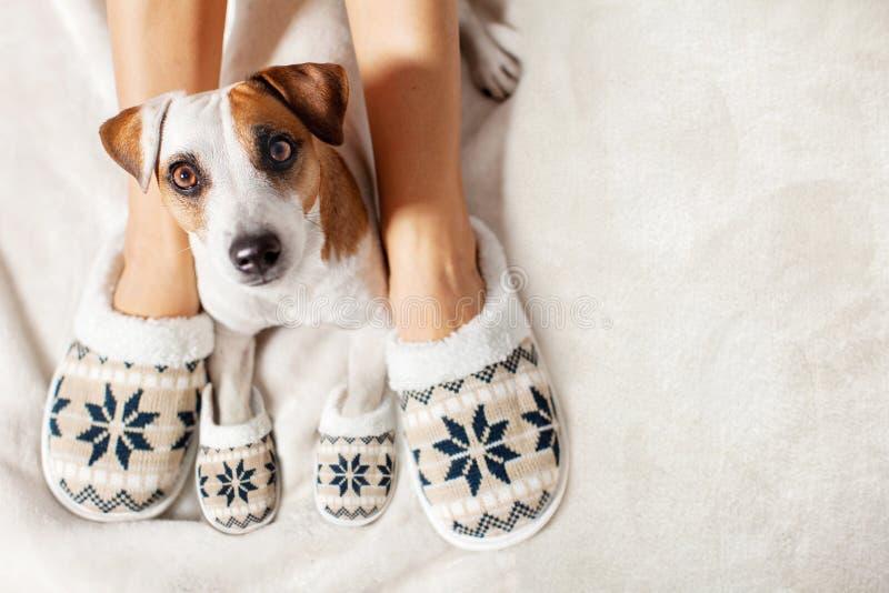 Fêmea e cão nos deslizadores foto de stock royalty free
