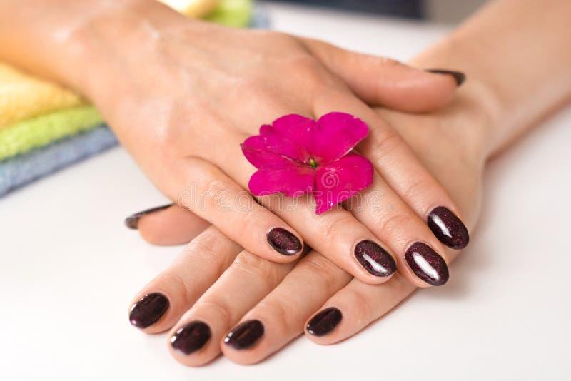 A fêmea na moda à moda prega o tratamento de mãos Mãos molhadas da jovem mulher bonita com cor roxa dos pregos com ouropel e flor imagem de stock