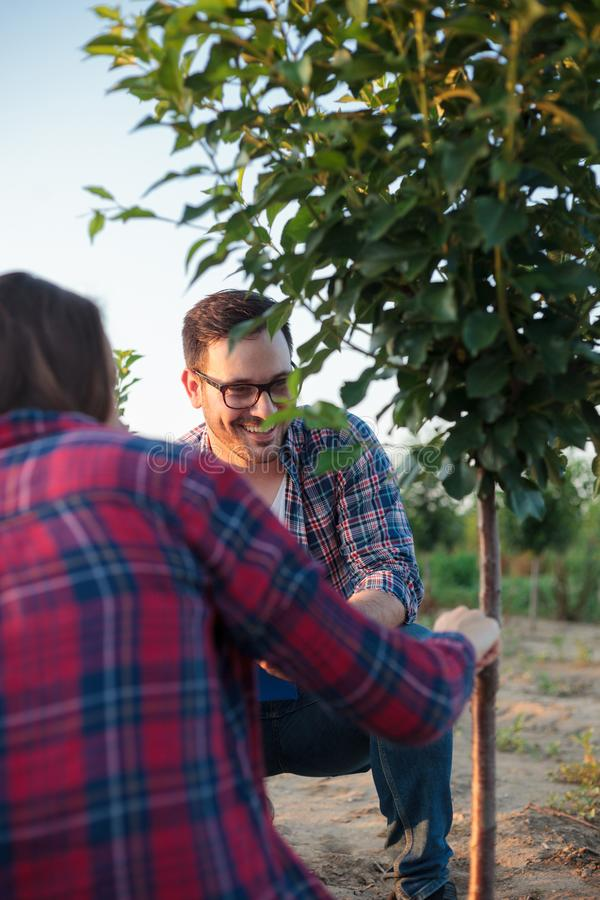 Fêmea nova feliz de sorriso e fazendeiro masculino e agrônomo que inspecionam a árvore de fruto transplantada em um grande pomar imagem de stock