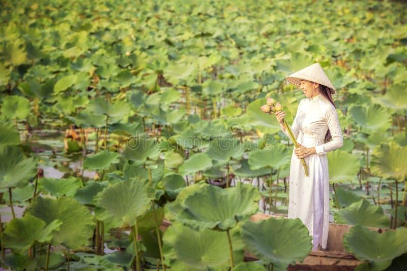 F?mea vietnamiana em um barco de madeira que recolhe flores de l?tus Mulheres asi?ticas que sentam-se em barcos de madeira para r imagens de stock