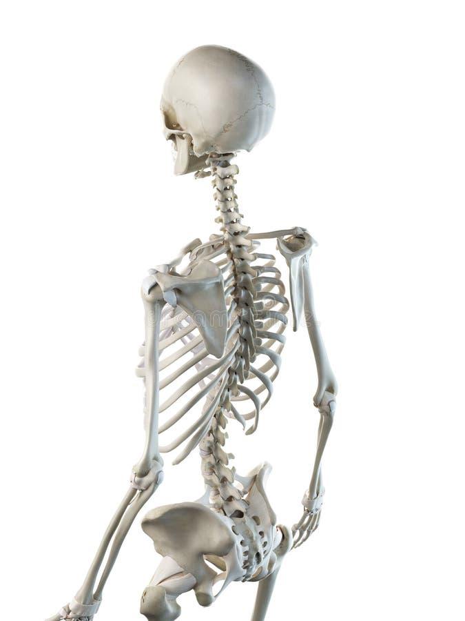 fêmeas esqueletais para trás ilustração do vetor
