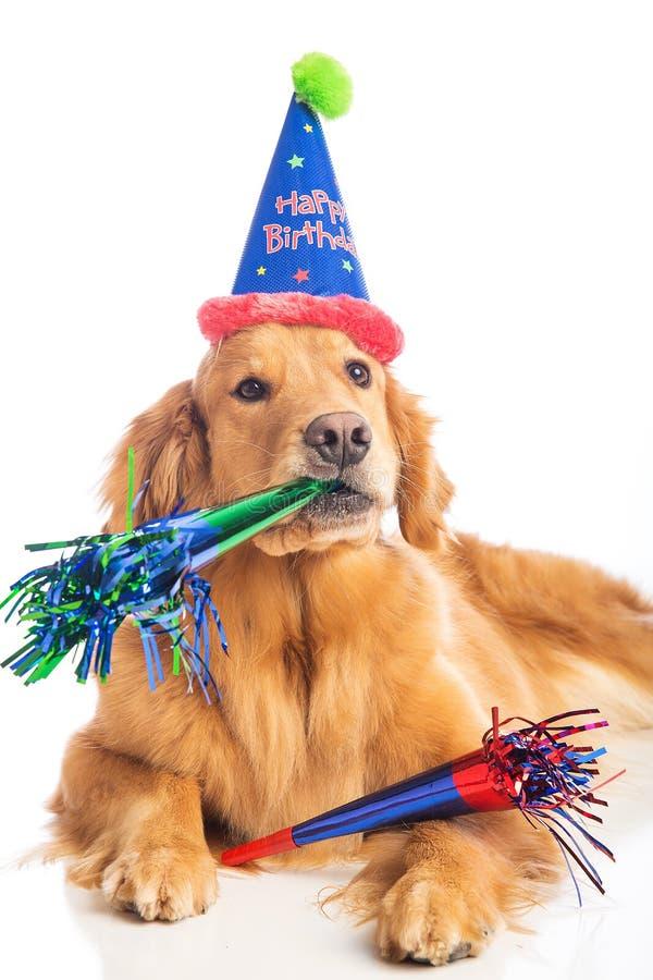 fete anniversaire chien