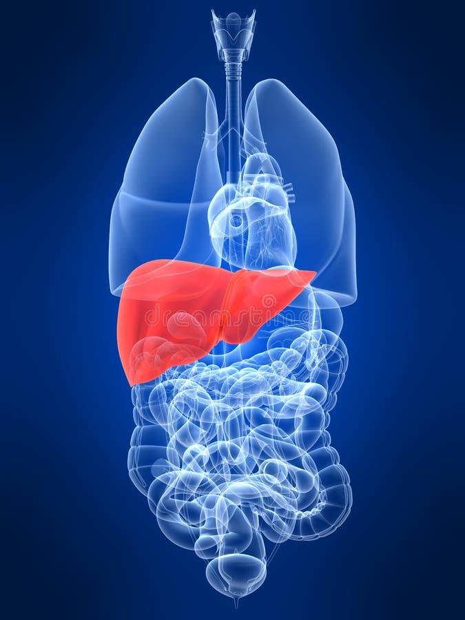 Fígado destacado ilustração royalty free
