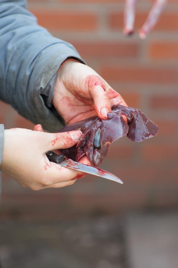 Fígado do coelho nas mãos imagens de stock royalty free