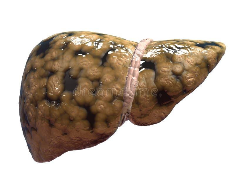 Fígado gordo ilustração royalty free
