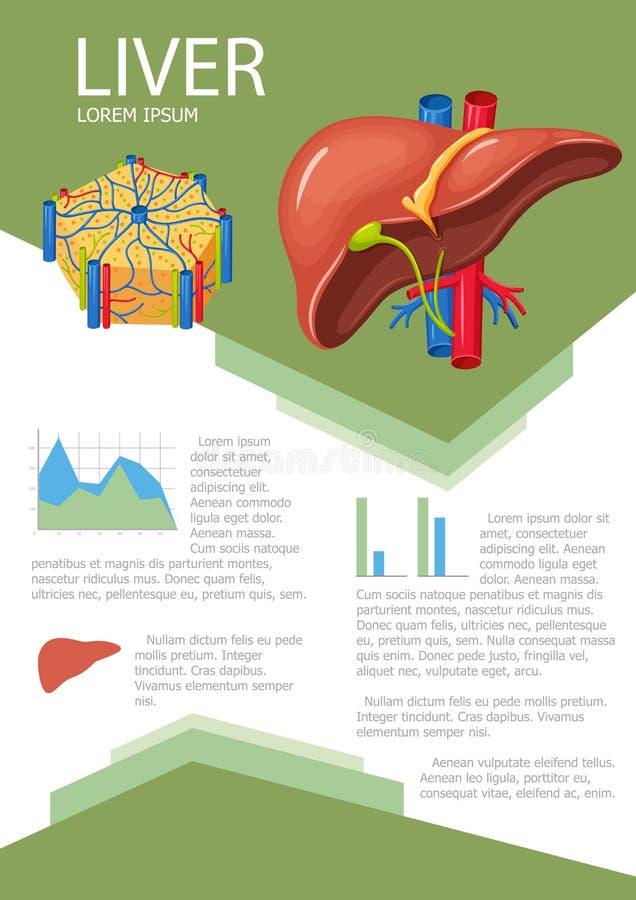 Fígado humano infographic ilustração stock
