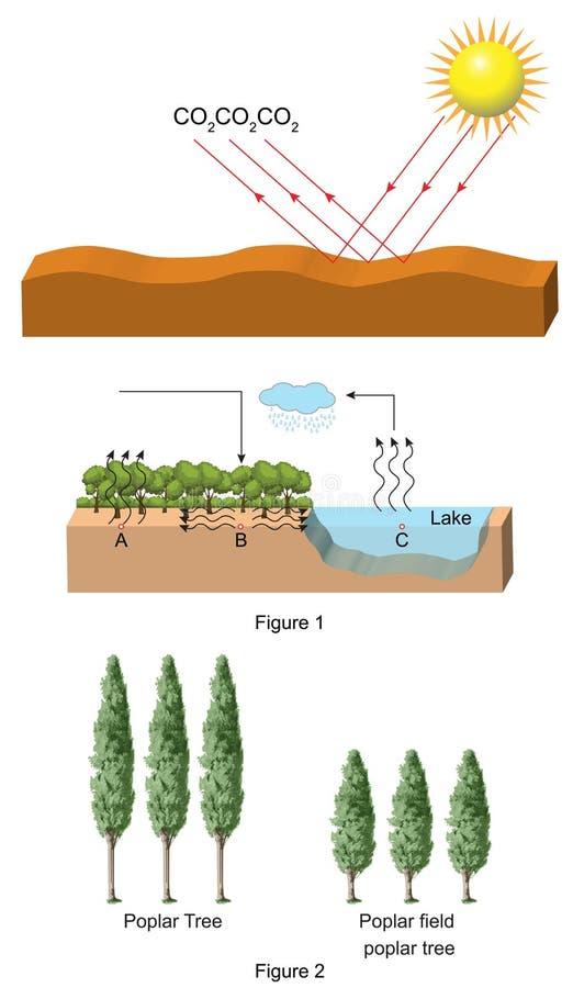 Física - ciclo de carbono e espécie da árvore ilustração royalty free