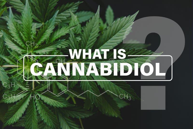 Fórmula de Cannabidiol CBD, hojas de la marijuana, cáñamo creciente indica, verde del fondo, cáñamo del cultivo, cáñamo CBD fotografía de archivo libre de regalías