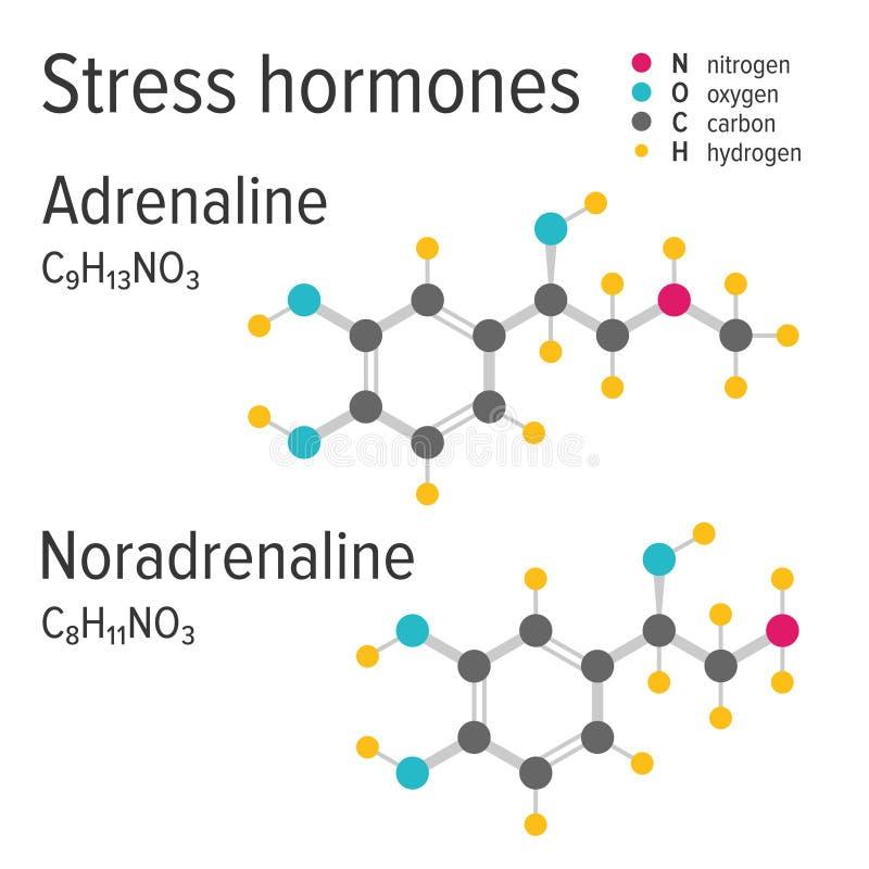 Fórmulas químicas do vetor dos harmones do esforço da adrenalina e do noradrenaline ilustração royalty free