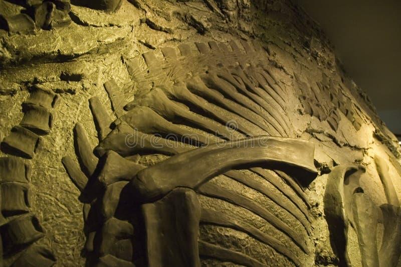 Fósil imagenes de archivo