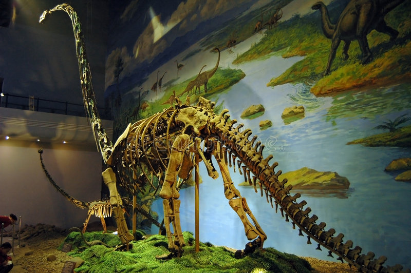Fósil de dinosaurio imagen de archivo libre de regalías