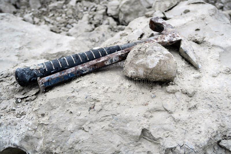 Fósil del erizo de mar en roca de la tiza collecting foto de archivo