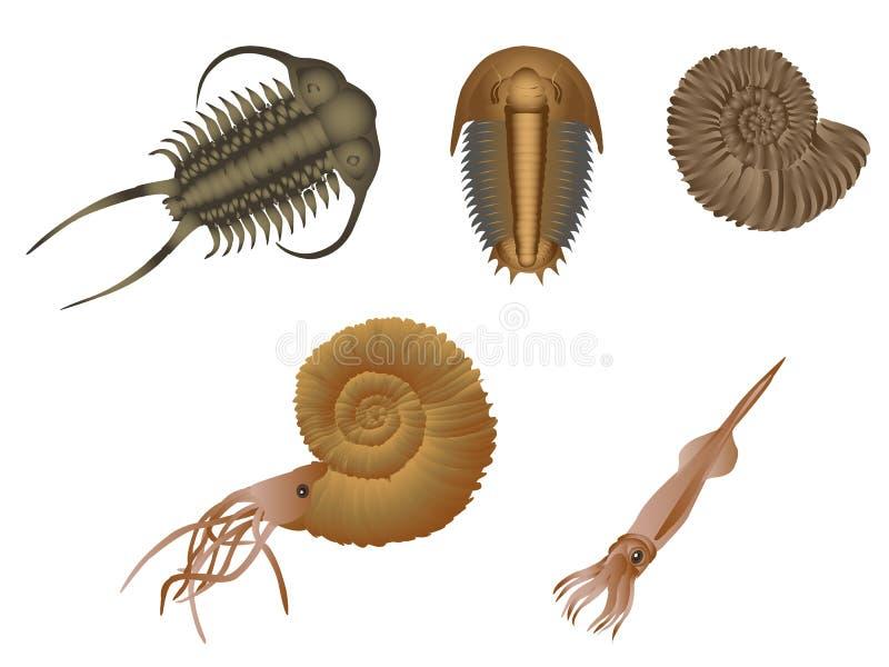 fósiles stock de ilustración