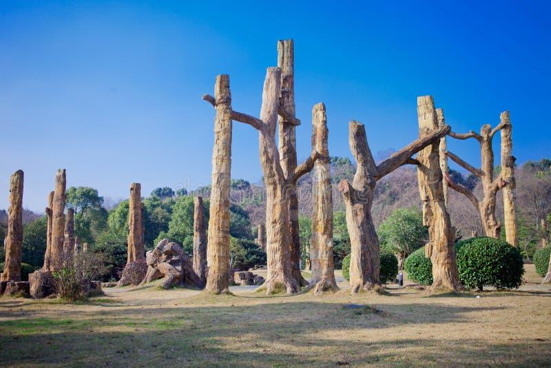 Fósiles del árbol en el sur de China foto de archivo libre de regalías