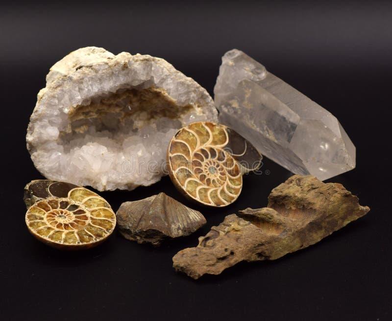 Fósiles y gemas en fondo negro fotografía de archivo
