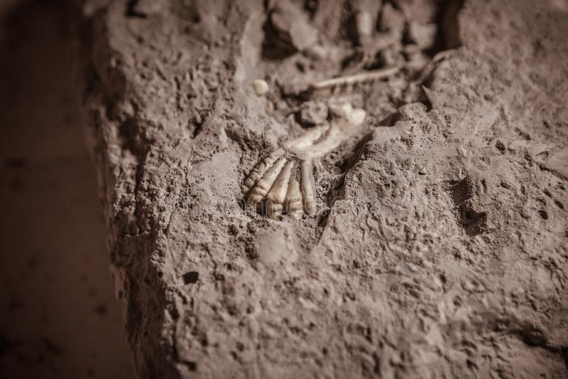 Fósseis de dinossauro, era jurássico, escavações Paleontological fotografia de stock royalty free
