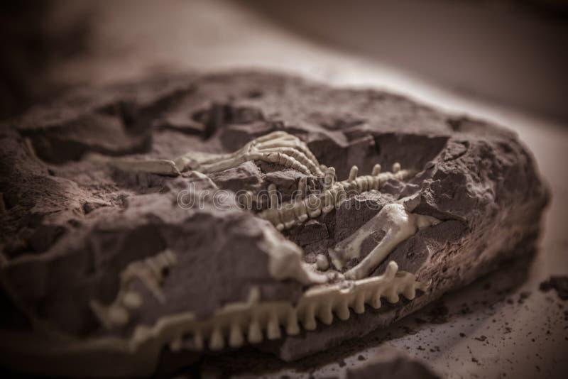 Fósseis de dinossauro, era jurássico, escavações Paleontological fotografia de stock