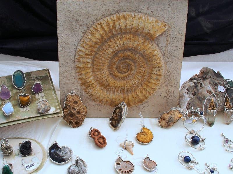 Fósseis de Trilobite fotos de stock