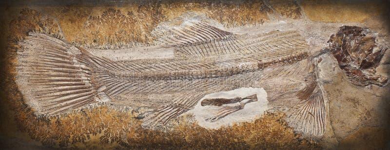 Fóssil imagens de stock