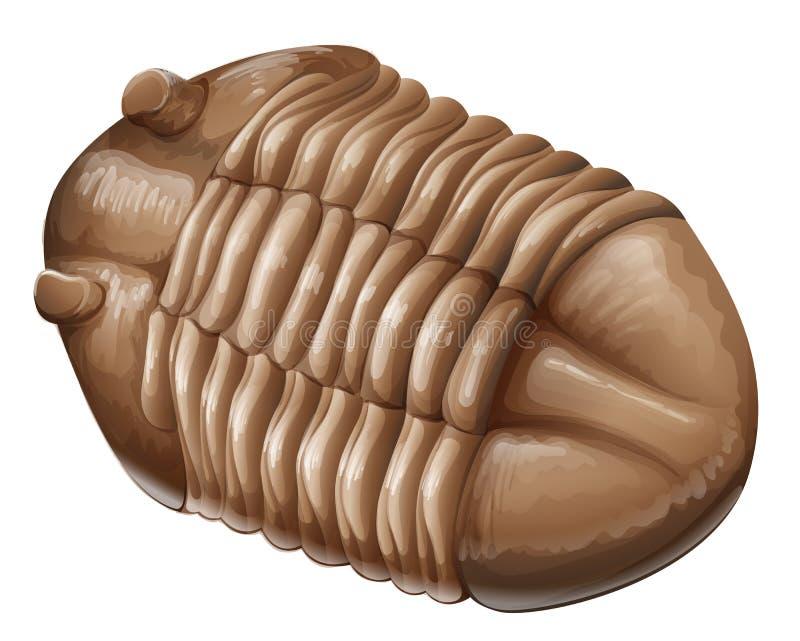 Fóssil de Trilobite ilustração royalty free