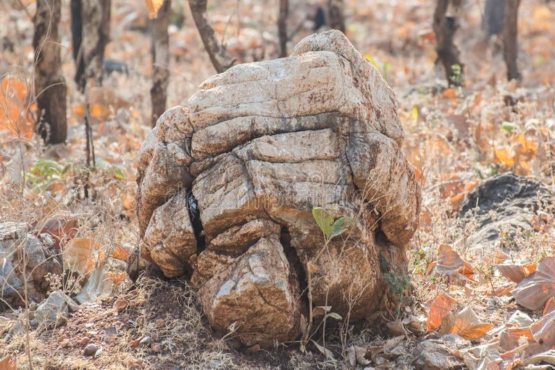 Fóssil do organismo imagens de stock royalty free