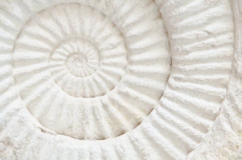 Fóssil pré-histórico da amonite imagem de stock royalty free
