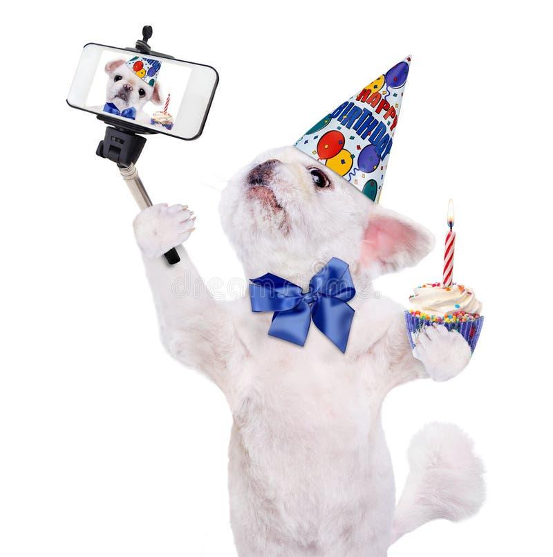 Födelsedaghund som tar en selfie samman med en smartphone royaltyfria foton