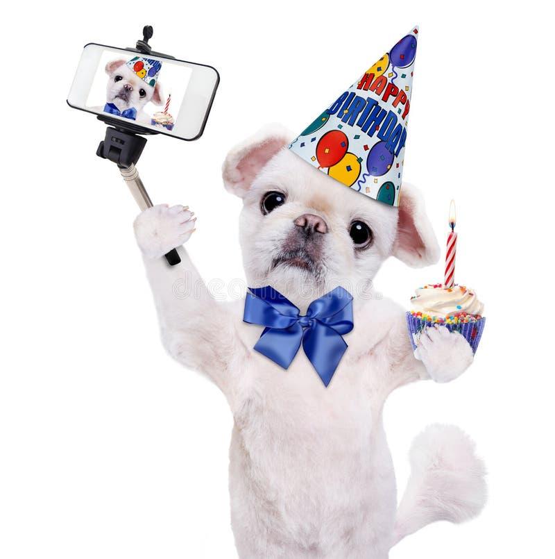 Födelsedaghund som tar en selfie samman med en smartphone royaltyfri fotografi