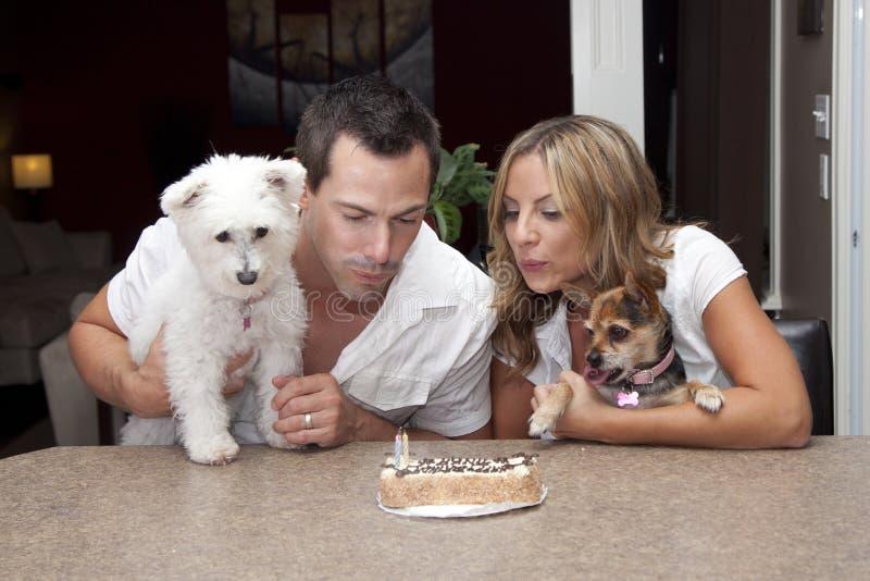 Födelsedagkaka för älsklings- hundkapplöpning royaltyfri bild