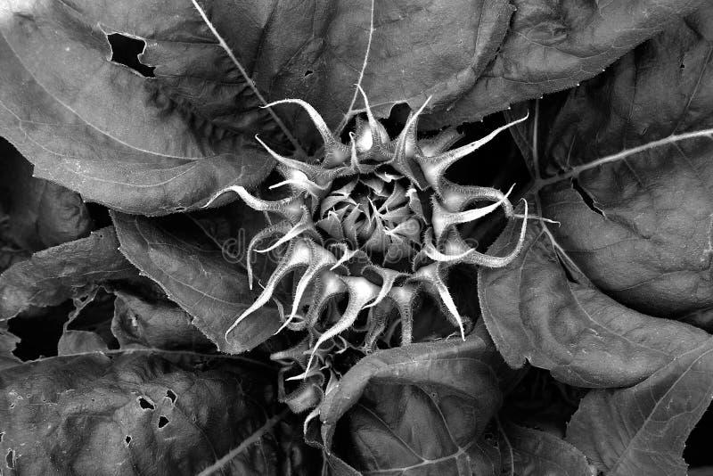 Download Födelsesolros fotografering för bildbyråer. Bild av stråle - 245957