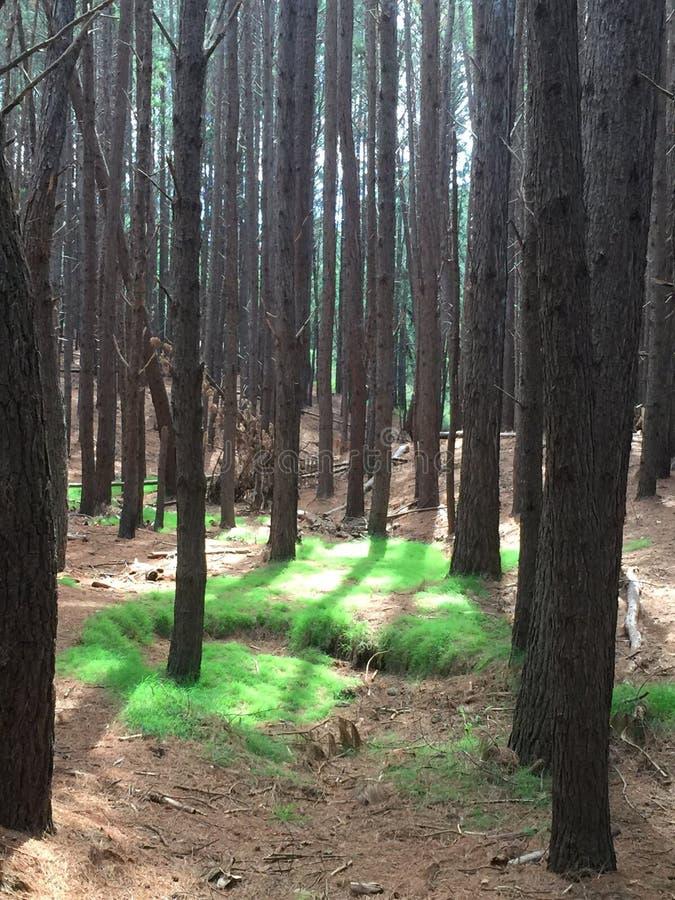 Följ banan för grönt gräs royaltyfria foton