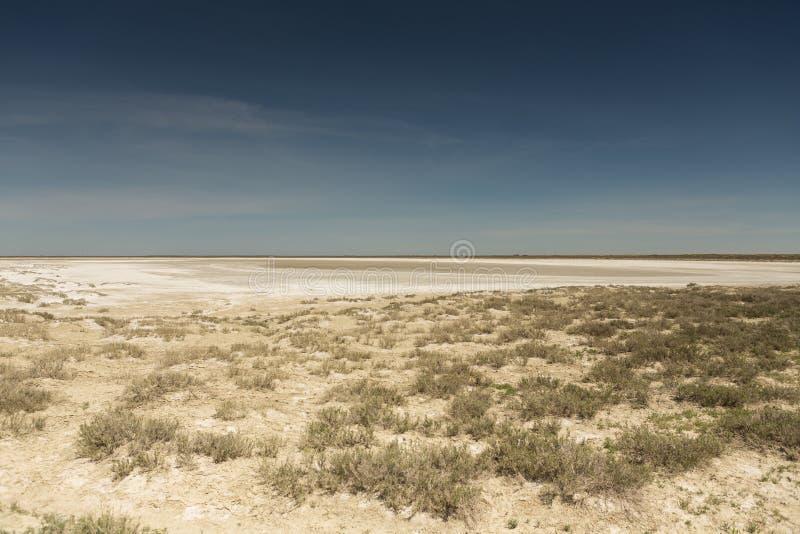 Följder av den Aral havskatastrofen Stäpp och sand på platsen av den tidigare botten av det Aral havet kazakhstan arkivbild
