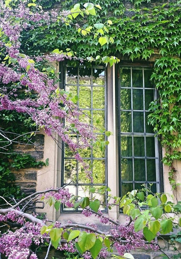 Fönster av gammal tegelstenbyggnad som täckas av den gröna växten arkivfoton