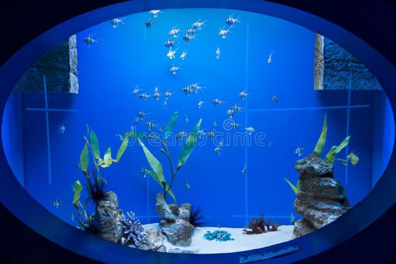 Fönster in i den undervattens- världen royaltyfri fotografi