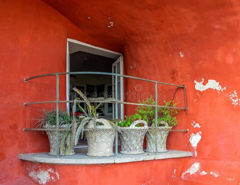 Fönster med balkongen med blommor i vaser, röd byggnad för gammal tappning med smulad murbruk i Portugal royaltyfri foto