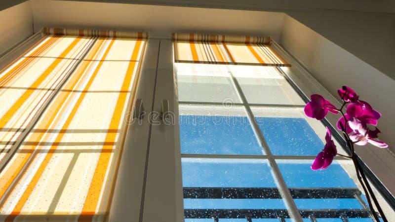 Fönster med rullgardiner och blomman fotografering för bildbyråer