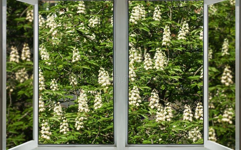 Fönster med sikt av blomningträdet arkivfoto