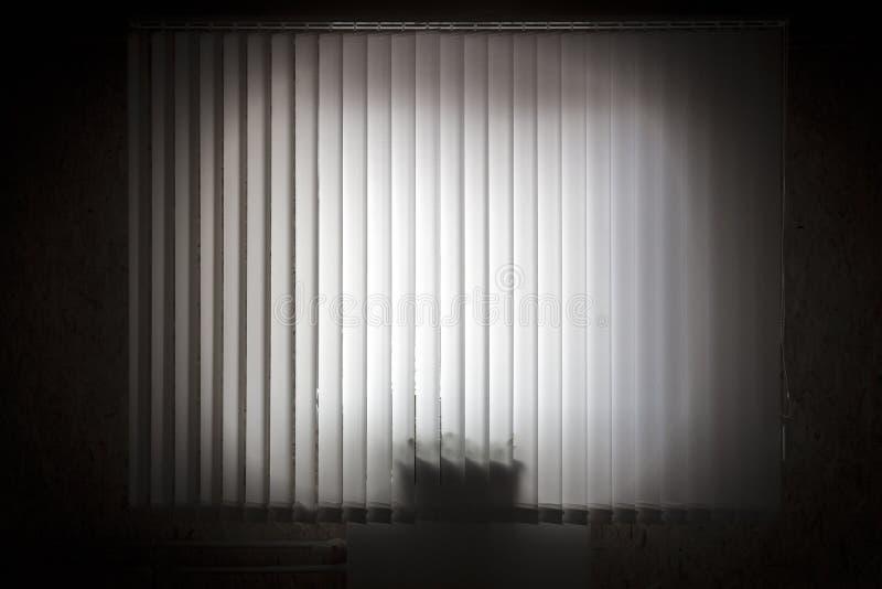 Fönster med vertikala rullgardiner royaltyfria foton