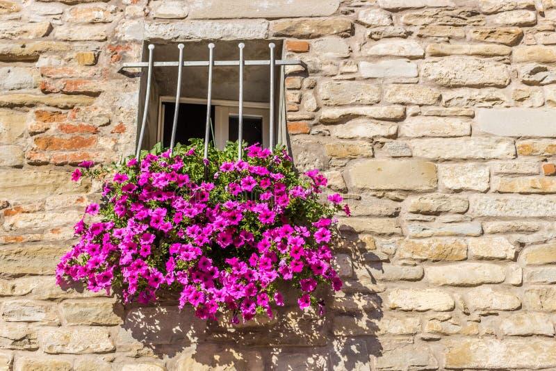 fönster med vita räcke och fuchsiapetunior royaltyfria bilder