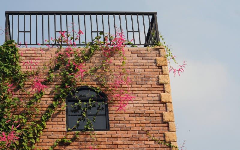 Fönster och blomma arkivbild
