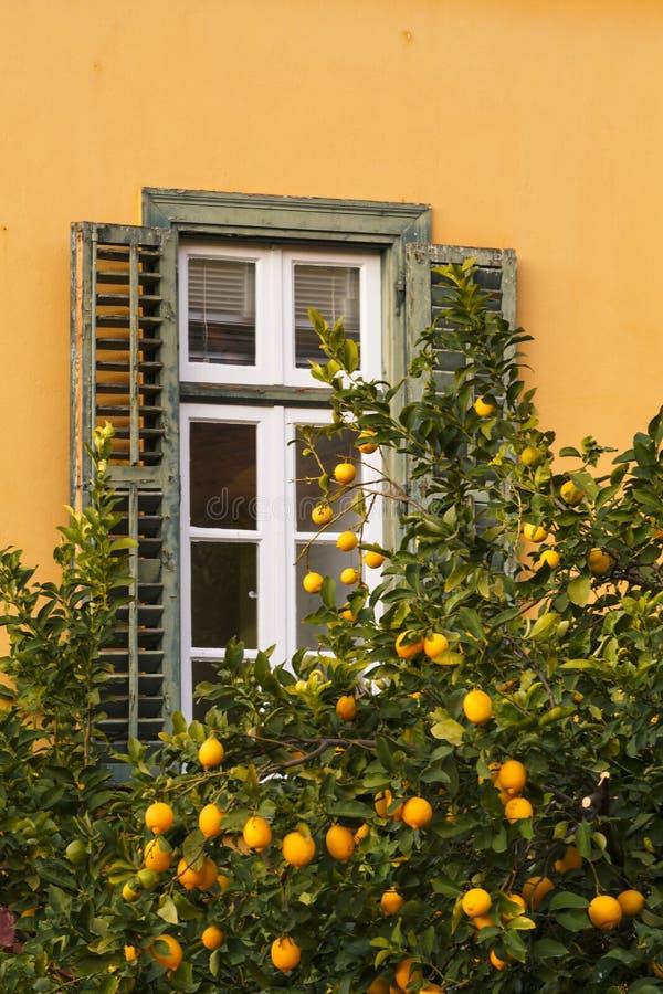 Fönster och ett citronträd i Aten royaltyfri foto
