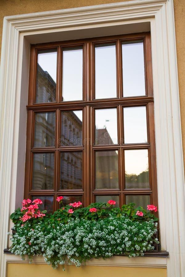 Fönster och röda blommor på fönster-fönsterbrädan royaltyfri bild